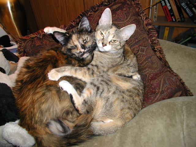 Oh what a happy life we have!  Who says cats are not affectionate…  Sweetie & Tiger will disagree with that.