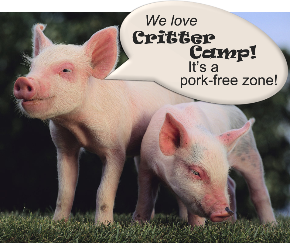 Happy piglets at Critter Camp in Amarillo TX