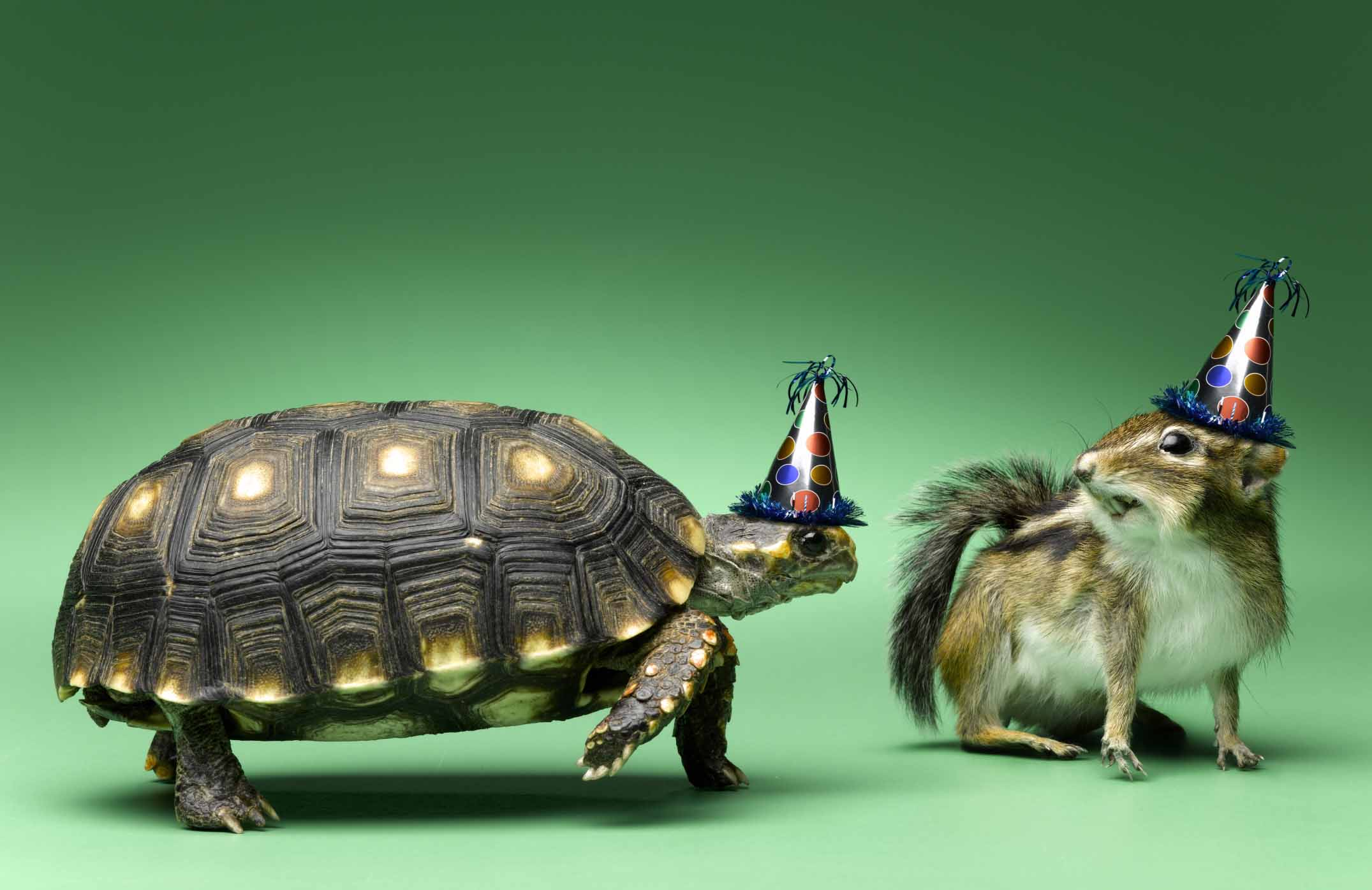 public domain turtle and squirrel with party hats